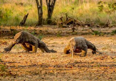 Komodo Island Trekking